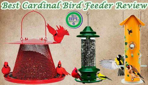 Best Cardinal Bird Feeder Reviews