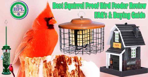 Best Squirrel Proof Bird Feeder Review